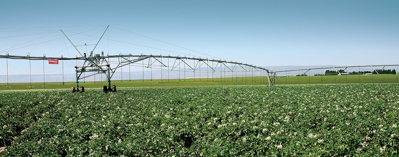 Washington Potato Grower Irrigates with Precision