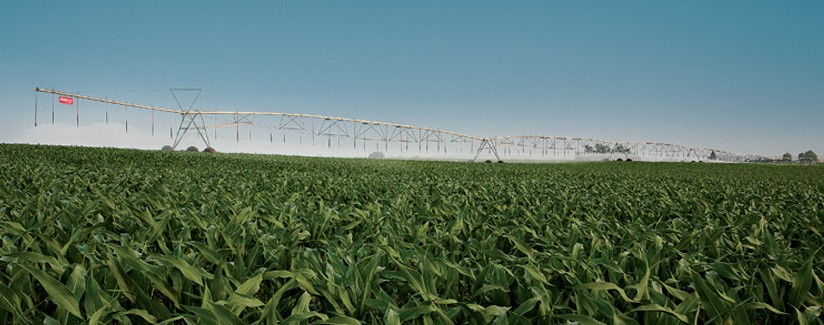 Effective Irrigation Management Maximizes Corn Yields