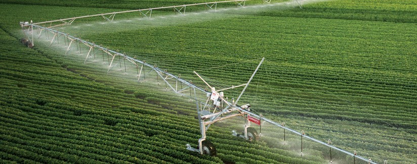 Technology Helps Growers Decide When to Stop Irrigating