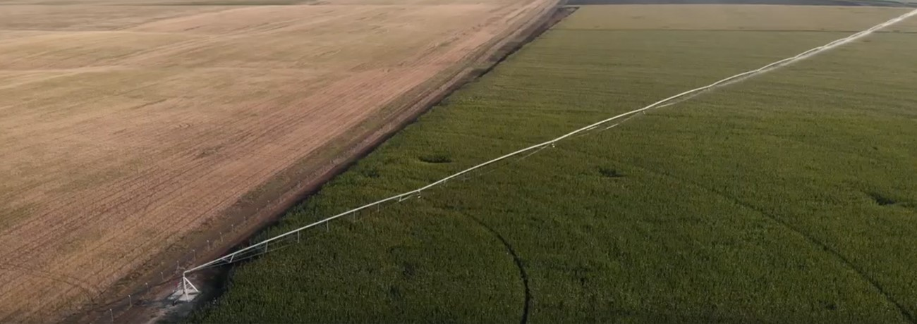 Center Pivot Irrigation Boosts Yields for Georgian Operation